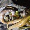 tigermoth66_exhaust_body_melt1