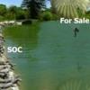 bcf79034e802d80861d1ce79ca129523--parachutes-alligators